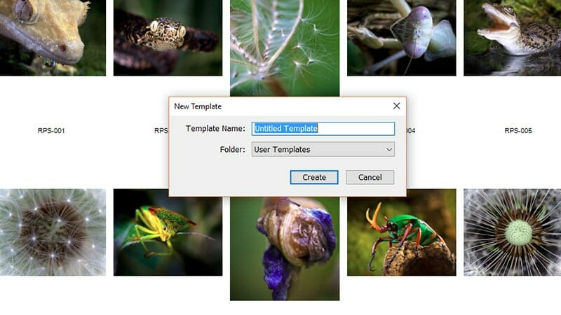 Creating a Contact Sheet in Lightroom